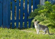 Le blanc de maison avec le gris barre le chat Image libre de droits