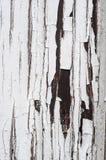 Le blanc extérieur âgé criqué a peint le fond en bois de verticale de texture Image libre de droits