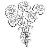 Le blanc noir graphique de fleur d'oeillet a isolé le vecteur d'illustration de croquis de bouquet Photos libres de droits