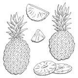 Le blanc noir graphique de fruit d'ananas a isolé le vecteur d'illustration de croquis Photographie stock