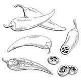 Le blanc noir graphique de poivre de piments a isolé l'illustration de croquis Image libre de droits