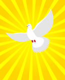 Le blanc a plongé dans le rayonnement ensoleillé Lumière divine et oiseau blanc blanc Photographie stock
