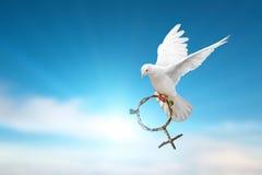 Le blanc a plongé tenant la branche verte dans le vol de forme de symbole de Vénus sur le ciel bleu Photo libre de droits