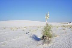 Le blanc sable le monument national Photographie stock