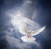 Le blanc volant a plongé sur le fond de ciel bleu Photographie stock