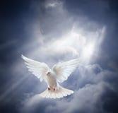 Le blanc volant a plongé sur le fond de ciel bleu Images libres de droits
