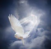 Le blanc volant a plongé sur le fond de ciel bleu Photo libre de droits