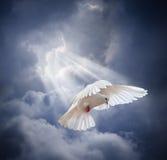 Le blanc volant a plongé sur le fond de ciel bleu Photographie stock libre de droits