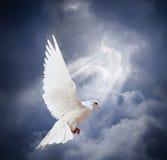 Le blanc volant a plongé sur le fond de ciel bleu Photo stock