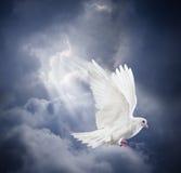 Le blanc volant a plongé sur le fond de ciel bleu Photos libres de droits