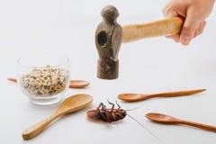 Le blatte di colpo del martello della tenuta della mano muoiono sul pavimento bianco con il cucchiaio ed il cereale di legno Immagine Stock