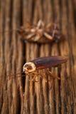 Le blatte sono morte sulla tavola di legno Immagini Stock