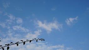 le bleu de fond opacifie le blanc de ciel Photo stock