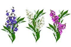 Le bleu fleurit la campanule Image stock