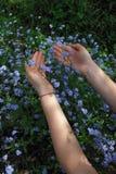 Le bleu m'oublient pas fleur dans le jardin Photos stock