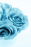 Le bleu s'est levé Image libre de droits