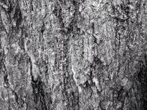 Le bois Photographie stock