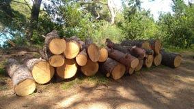 Le bois coupé photos libres de droits