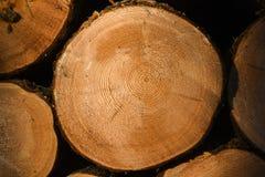 Le bois coupé a arrangé dans la forêt au coucher du soleil image libre de droits