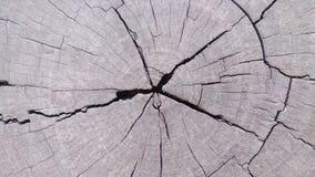 Le bois détaille des papiers peints et des milieux de texture Photo libre de droits