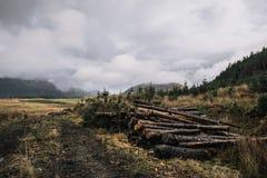 Le bois de charpente ouvre une session un jour pluvieux Images libres de droits