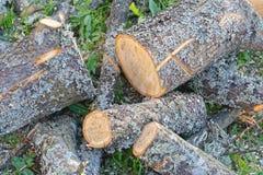 Le bois de chauffage désordonné ouvre une session la terre photographie stock