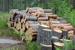 Le bois de chauffage ouvre une session la forêt d'été Photographie stock