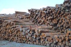 Le bois de construction d'affaires de yard de bois de charpente a empilé le bois lourd d'environnement d'industrie de forêt images libres de droits