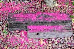 Le bois de construction - vieux bois - là sont des fleurs sur la surface Photographie stock