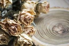 Le bois de coupe avec les roses sèches ; roses sèches sur un arbre de coupe Photos libres de droits