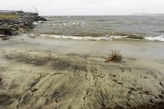 Le bois de flottage a lavé sur la plage avec les vagues se brisant et le commutateur de mouettes images stock