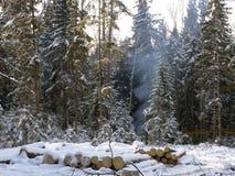 Le bois de l'hiver Photographie stock