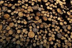 Le bois de pin s'est rassemblé après le feu, Guadalajara, Espagne Photographie stock libre de droits