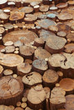 Le bois de teck stumps le fond Photographie stock