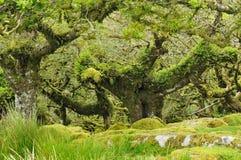 Le bois de Wistman Photo libre de droits