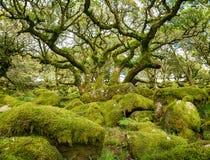 Le bois de Wistman sur Dartmoor Image stock