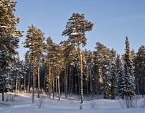 Le bois en sommeil tombé Photographie stock libre de droits