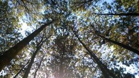Le bois et le ciel photos stock