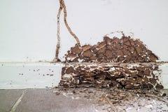 le bois intérieur était a été endommagé par le termite parce que ce secteur pas s photo libre de droits