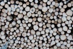 Le bois ouvre une session la forêt Photos stock