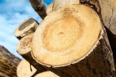 Le bois ouvre une session le ciel bleu Photos stock