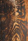 Le bois a saisi la coloration de tigre pendant qu'il vieillissait Photo libre de droits