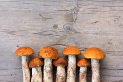 Le boletus comestible frais d'orange-chapeau de champignons de forêt est présenté dans une rangée sur vieux Gray Wooden Backgroun image libre de droits