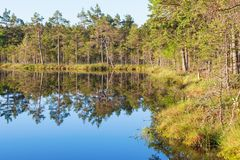 Le bord des water de lac forest Photo stock