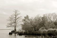 Le bord du marais Photo libre de droits