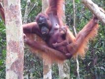 Le Bornéo Images libres de droits