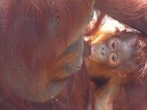 Le Bornéo Photos stock