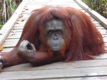 Le Bornéo Photo libre de droits