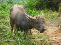 Le Bornéo Image libre de droits