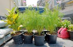 Le borse del vaso e del suolo di fiore degli strumenti di giardinaggio disposte dietro appoggiano della t Fotografia Stock Libera da Diritti